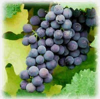 Grape like cluster