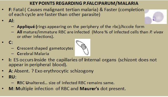 Key points regarding P falciparum malaria