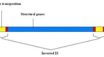 Transposons (Jumping Genes): General characteristics and composition