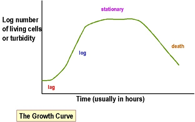 Bacterial growth curve: phases and significance