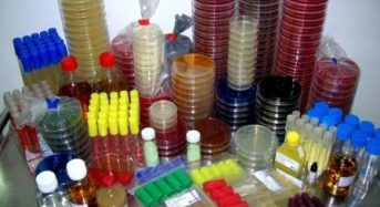 Primary purpose of culture media used for routine Bacteriology