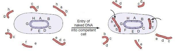transformation genetics Transformation (genetics) from wikipedia, the free encyclopedia jump to: navigation, search an unrelated process called malignant transformation occurs in the.