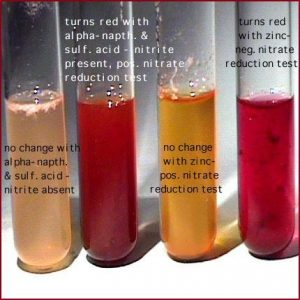 Nitrate reducation test experiments