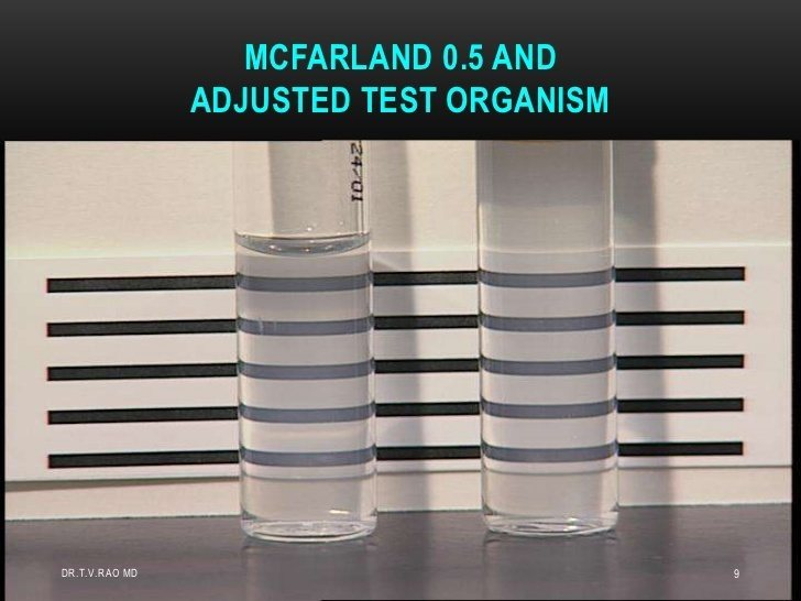 Bacterial suspension prepared to match the turbidity of the 0.5 McFarland turbidity standard