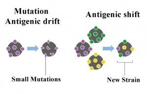 Antigenic Shift and Drift