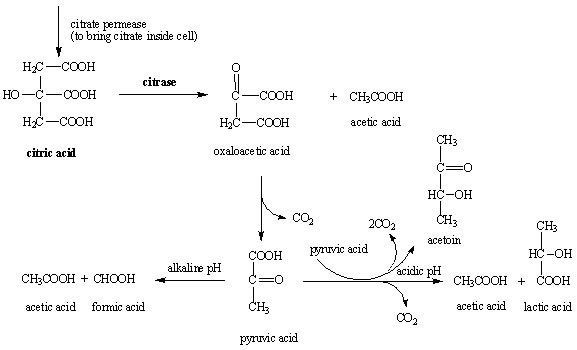 Are carbonates and bicarbonates bases of dating 3