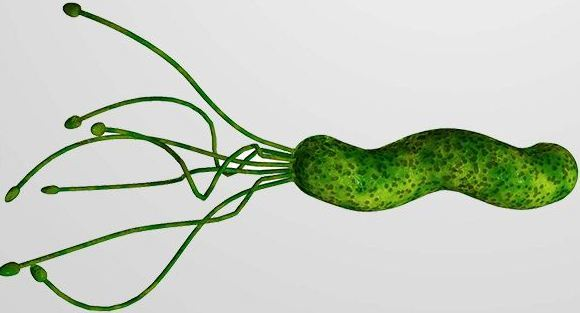 Helicobacter pylori tests and results - Bacterie helicobacter pylori ...