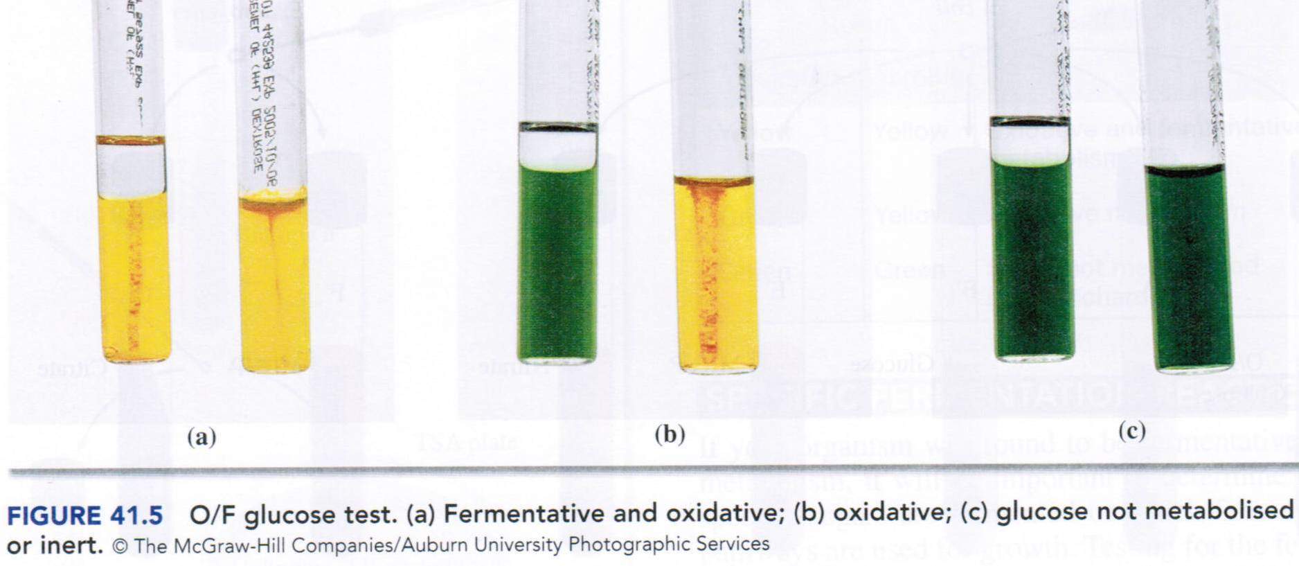 laboratory protocol for carbohydrates Phenol-sulfuric acid method for total carbohydrates  but follow good laboratory practices outlined by environmental health and safety protocols at your.