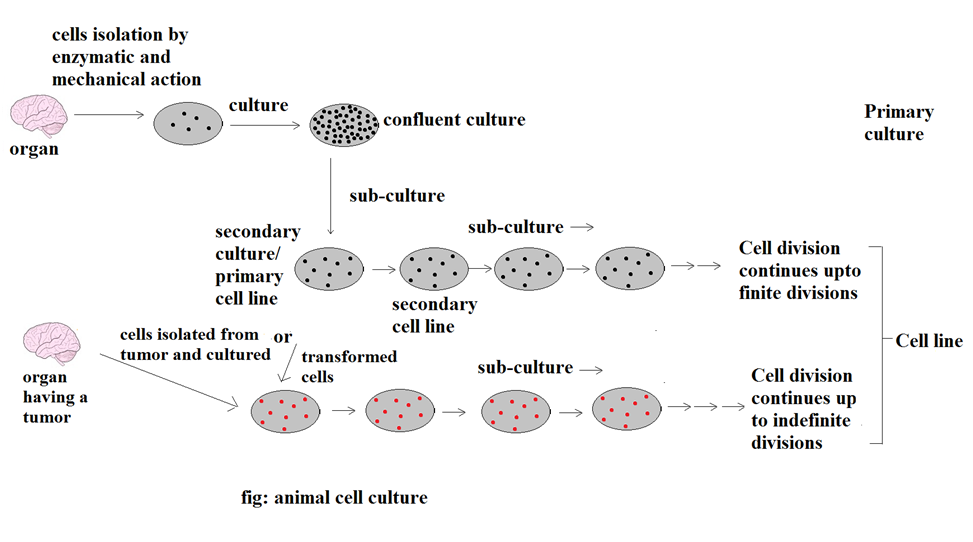 free animal cell culture book
