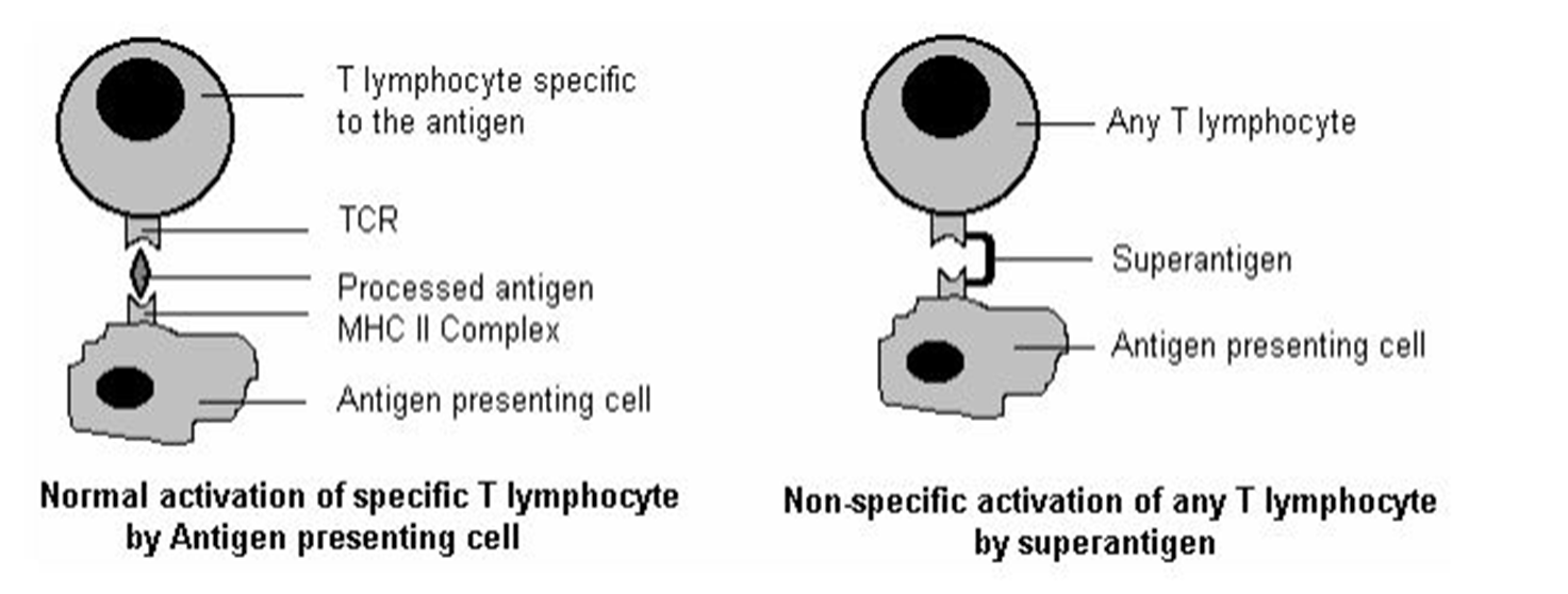 Antigen  Structure  Types And Factors Affecting